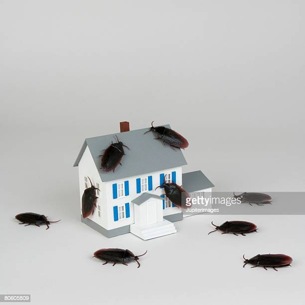 Miniature house and cockroaches