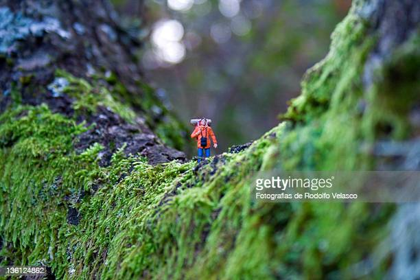 Miniature human figure walking down tree trunk