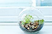 Miniature rock garden terrarium