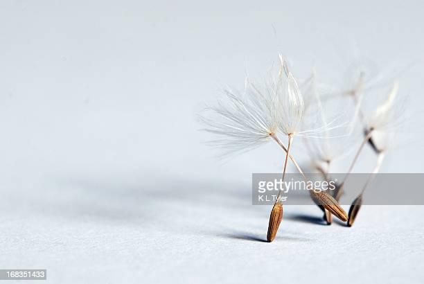 Minimalist Dandelion Seeds