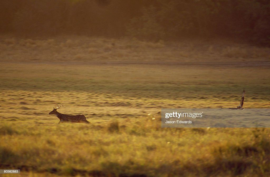 Minneriya National Park, Sri Lanka. : Stock Photo