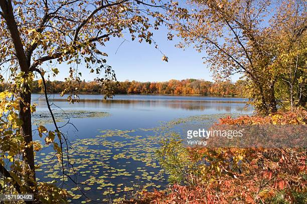 Minnesota Lake Landscape Scenery in Autumn with Trees and Forest