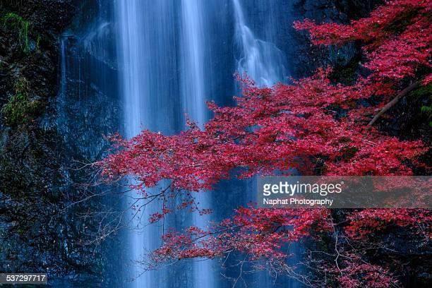 Minoo Falls and Fall foliagfe