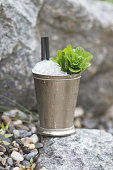 Refreshing Mint Julep