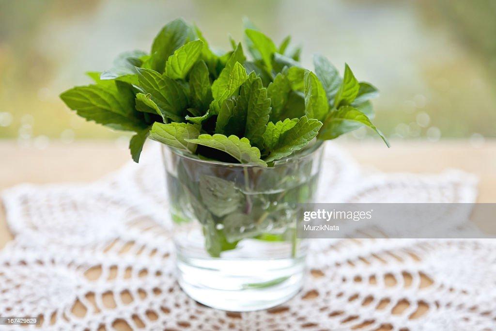 Minzblätter in ein Glas mit Wasser : Stock-Foto
