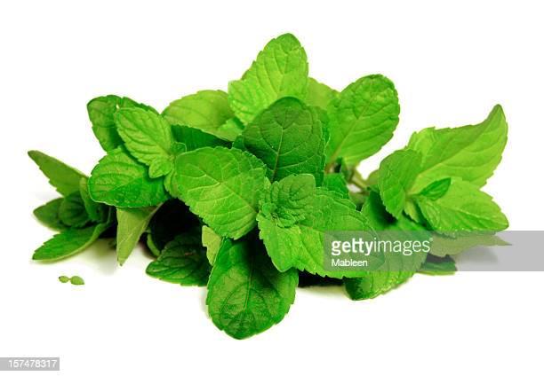 Mint leaves (Mentha)