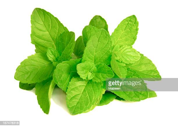 Mint leaves (Mentha)