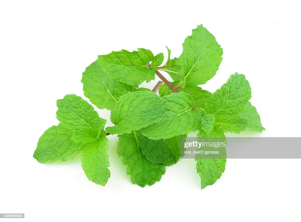 mint on white : Stock Photo