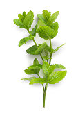 Sprig of garden mint isolated on white