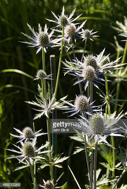 Minter Gardens, flower detail