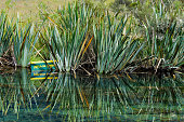 Mirror Lake near Te Anau on the South Island of New Zealand