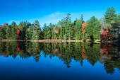 Forest and its reflection in Church Pond