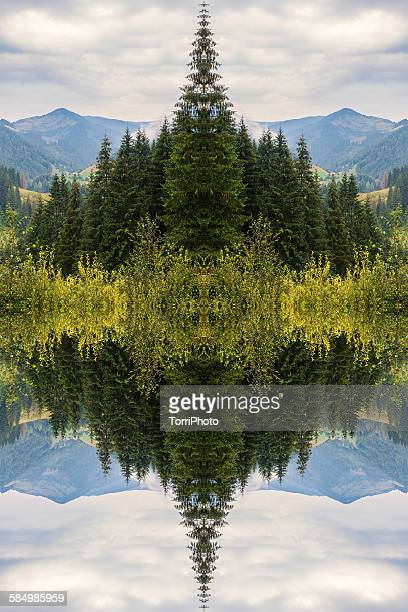Mirror reflection of mountain forest landscape
