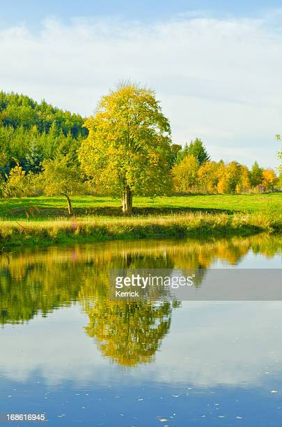 mirroring Baum in river
