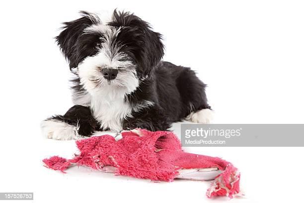 Espièglerie chien