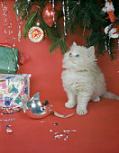 Mischievous kitten with broken Christmas ornament