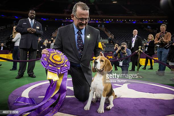 Miss P a 15 inch beagle from the hound group wins the Best in Show award of the Westminster Kennel Club dog show after being shown by William...