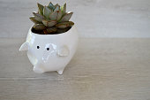 Miss Piggy Pot Plant with Succulent inside on white wood background