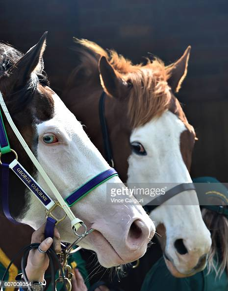 Miss Vista poses with retired champion sprinter Apache Cat after having a jumpout during Melbourne Racing at Caulfield Racecourse on September 17...