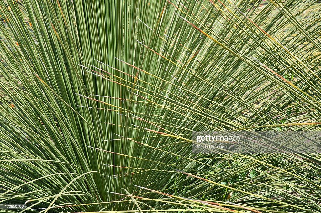 Mission garden plants and flowers : Stock Photo