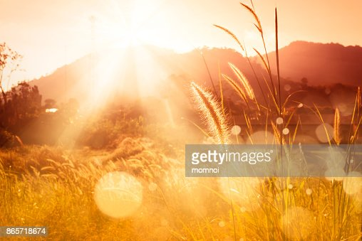 Mission grass backlitght and bokeh at sunset mountain : Stock Photo