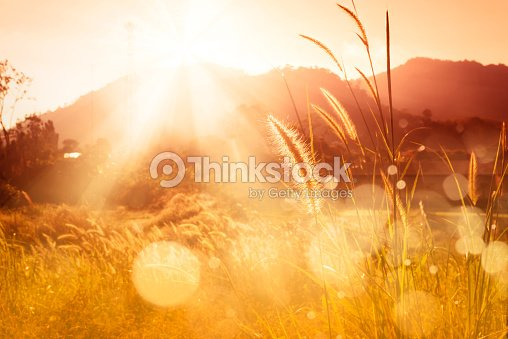 Mission d'herbe backlitght et bokeh au coucher du soleil montagne : Photo