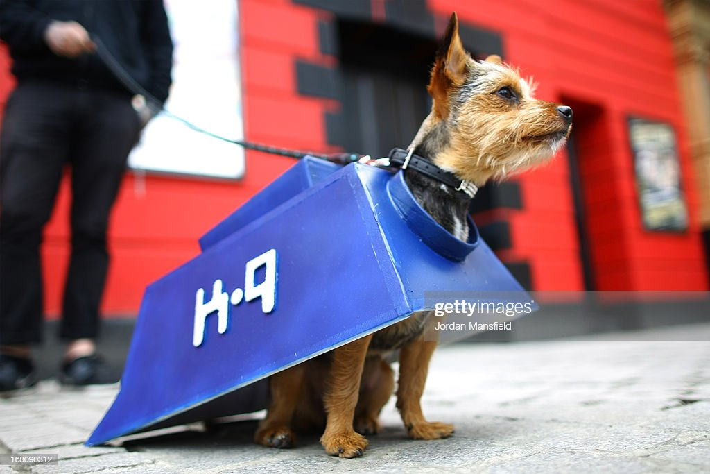 Missy, a Chorkie is dressed up as the character K-9 from the film and TV series Doctor Who on May 5, 2013 in London, England. Enthusiasts gathered at the Picture House in Stratford to parade their dogs dressed up as famous Sci-Fi characters as part a London-wide event called Sci-Fi London.