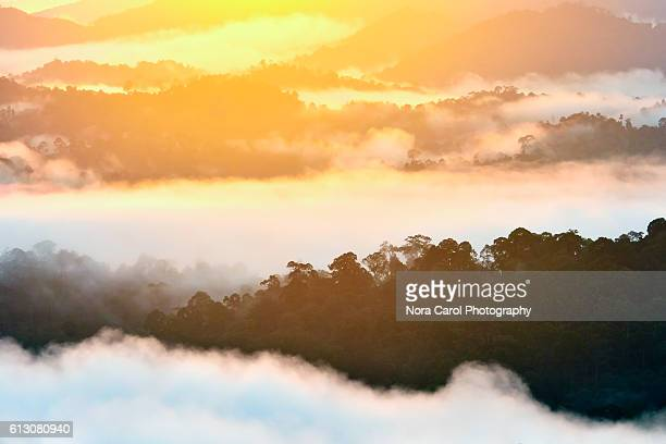 Mist and fog during Sunrise over Danum Valley rain forest.
