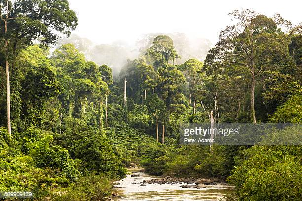 Mist and river through tropical rainforest, Sabah