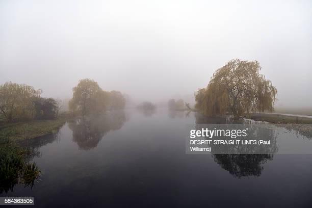 Mist as companion