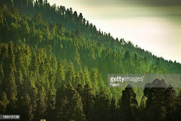 Mist sur les montagnes de la Sierra Nevada