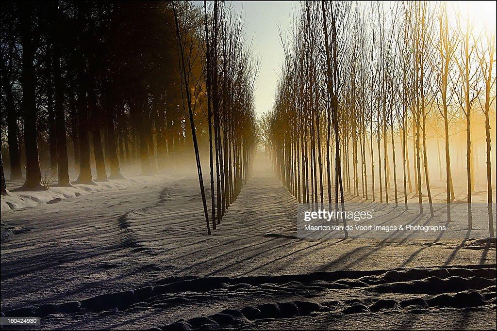 Mist on the treefarm