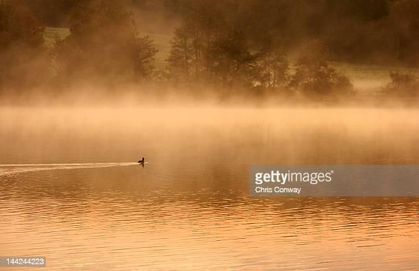 Mist on water.