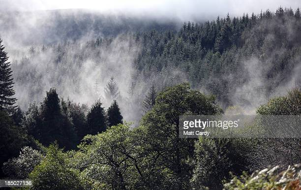 Mist rises from trees as British Army officer cadets from the Royal Military Academy Sandhurst take part in Exercise Long Reach in the Brecon Beacons...