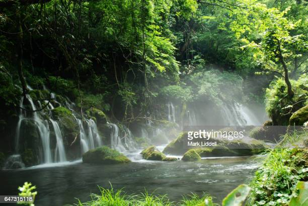 Mist rising from river and waterfall in woods lush green forest