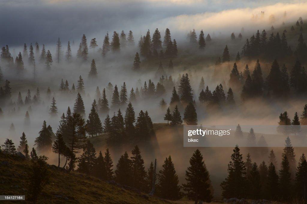 Mistic Foggy Morning : Stock Photo