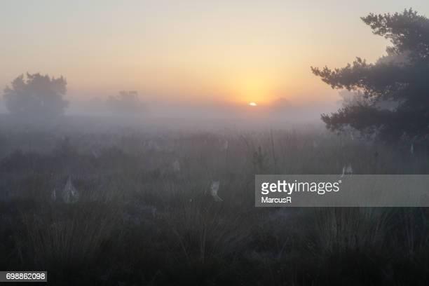 Mistige zonsopkomst boven de hei