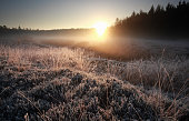 misty autumn sunrise over frosted meadow, Netherlands