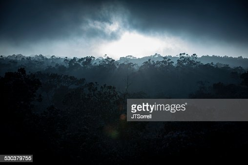Misty Dark Jungle