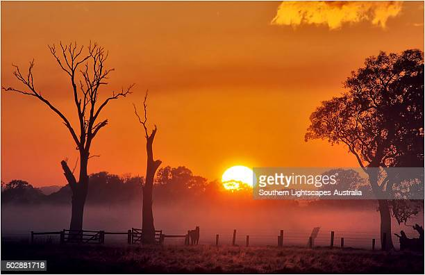 A misty dawn in the rural area of Carrum downs, Victoria, Australia.