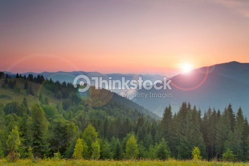 Misty dawn in the summer : Stock Photo