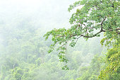 Misty forest at Khao Yai national park, Thailand