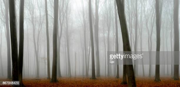 Mistige bos tijdens een mistige dag met strand bomen en bruine bladeren op de grond