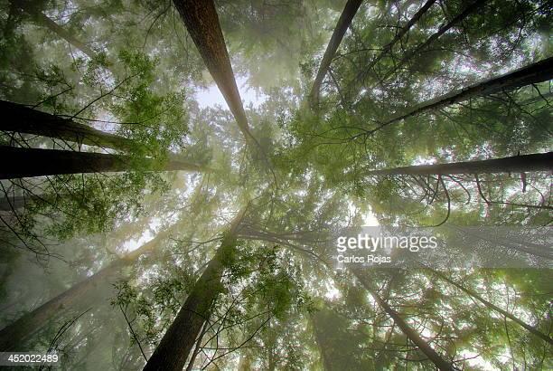 Misty forest light