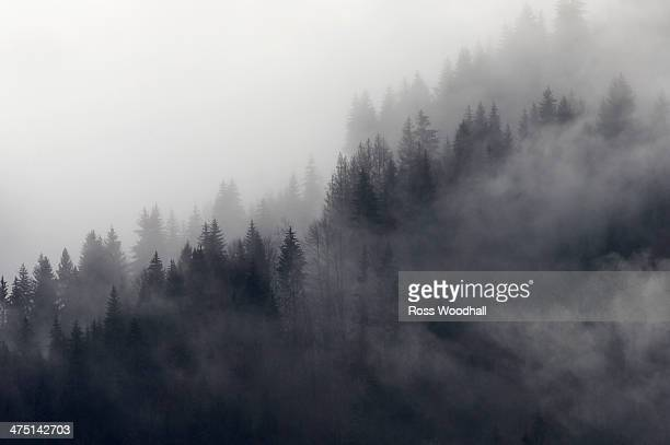 Misty forest, Murren, Bernese Oberland, Switzerland
