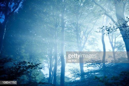 Misty forest : Stock Photo