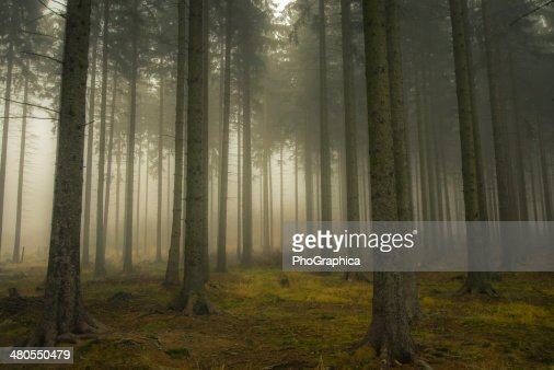 Misty Forrest : Stock Photo