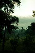 Misty Indonesian Jungle