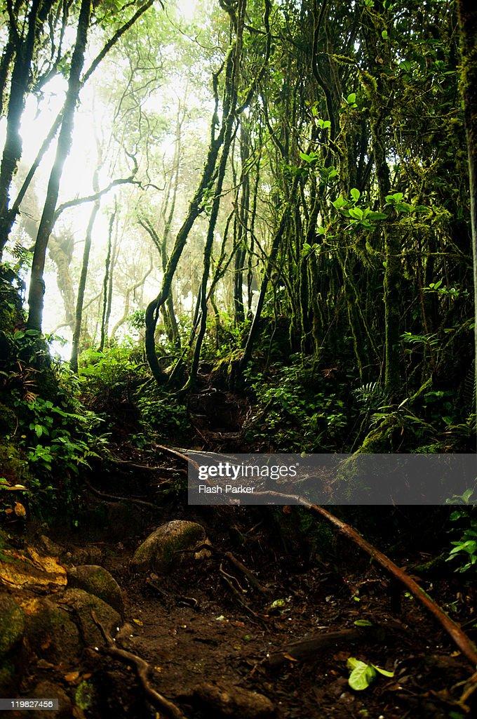 Misty jungle : Stock Photo