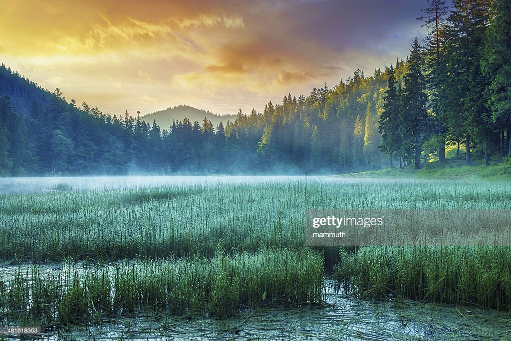 Misty Lake at Sunrise : Stock Photo